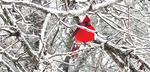 Crimson in the Snow by Trevor Blackstock